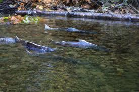 Fishing trips -Salmon river
