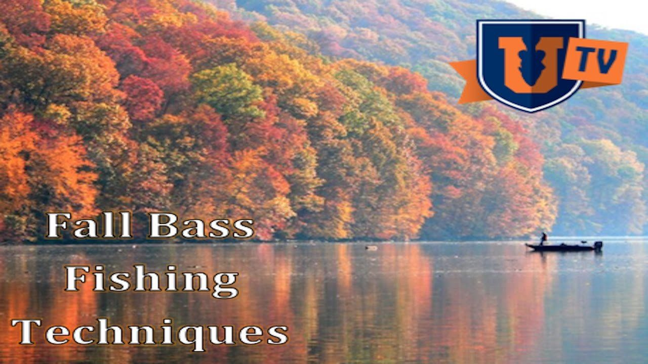 Bass fishing in the fall by mike iaconelli occasional fisher for Fall bass fishing tips
